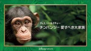 ディズニーネイチャー/チンパンジー 愛すべき大家族